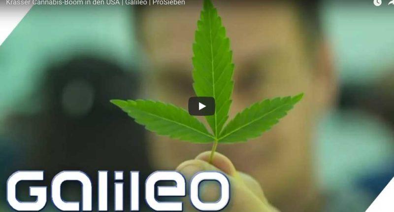 In Denver Colorado boomt Cannabis