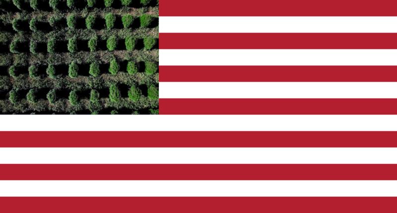 Wirtschaftsfaktor Cannabis in den USA