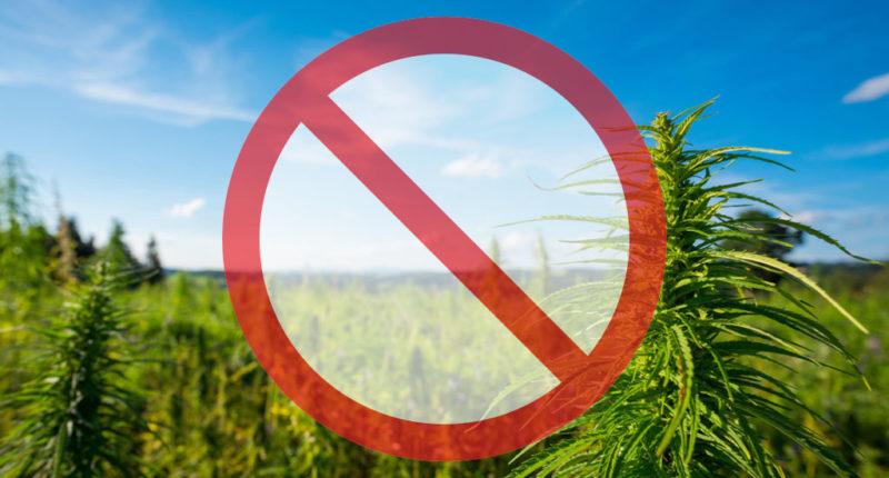 Warum ist Cannabis eigentlich verboten?