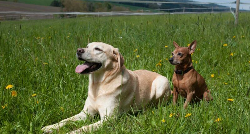 bekiffte Hunde und Haustiere